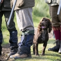 Shooting and rural organisations take responsibility of move away from lead ammunition