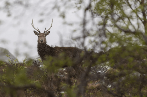 SLE welcome improved ratings system for sporting rights and deer forests