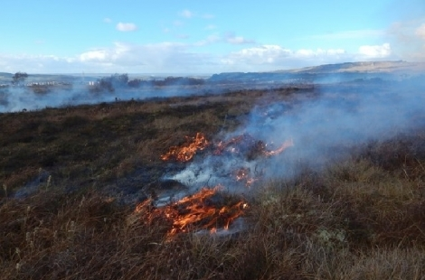 Land managers urged to stop muirburn during Covid-19 pandemic