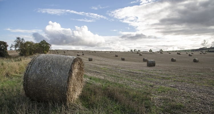 UK Farming Roundtable February 2020 - focusing on the Agriculture Bill and trade